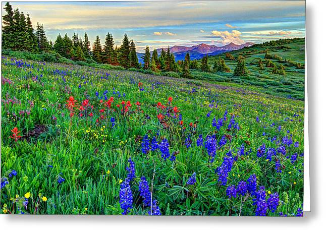 Fort Collins Greeting Cards - Wildflower Hill Greeting Card by Scott Mahon