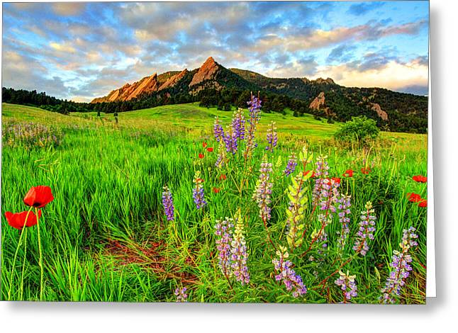 Wildflower Mix Greeting Card by Scott Mahon