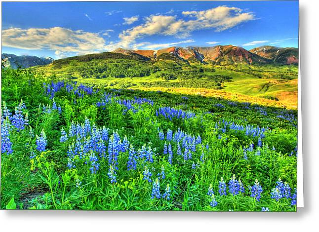 Mountainside Art Greeting Cards - Wildflower Wonder Greeting Card by Scott Mahon