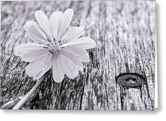 Wildflower...bloom Greeting Card by Tom Druin