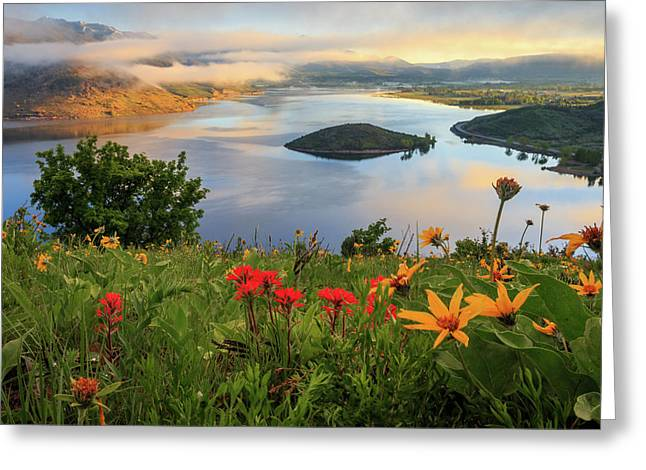 Heber Springs Greeting Cards - Wildflowers above Deer Creek. Greeting Card by Johnny Adolphson