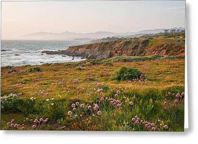 Wildflowers And Fog On The Fiscalini Preserve Greeting Card by Lynn Bauer