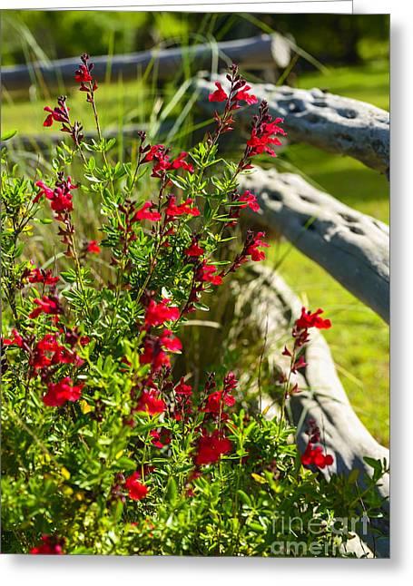 Lyndon Greeting Cards - Wildflowers and Rail Fence Greeting Card by Thomas R Fletcher