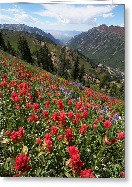 Wildflowers And View Down Canyon Greeting Card by Brett Pelletier