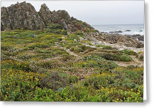 China Beach Greeting Cards - Wildflowers at China Rock - Pebble Beach - California Greeting Card by Brendan Reals