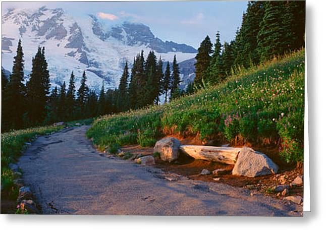 Wildflowers At Sunset, Mount Rainier Greeting Card by Panoramic Images