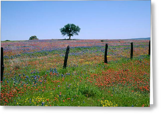 Wildflowers In A Field, Texas, Usa Greeting Card by Panoramic Images