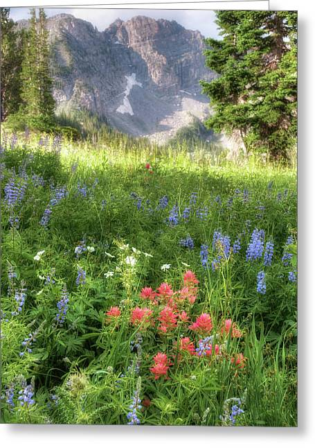 Meadow Photographs Greeting Cards - Wildflowers in Albion Basin Utah Greeting Card by Utah Images