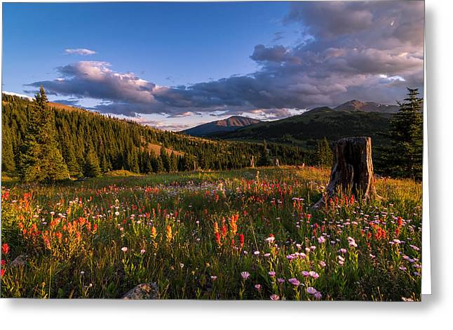 Wildflowers In The Evening Sun Greeting Card by Michael J Bauer