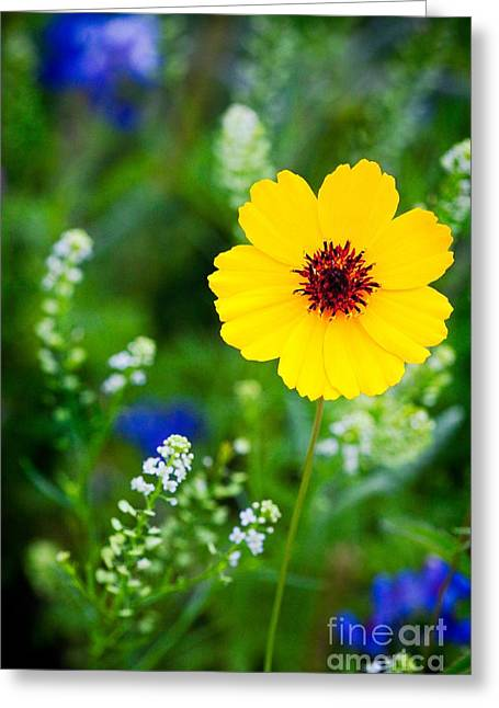 Wildflowers In The Hill Country Of Central Texas Greeting Card by Matt Suess