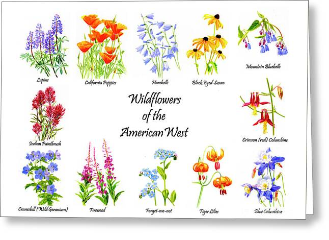 Wildflowers Of The American West Poster Greeting Card by Sharon Freeman