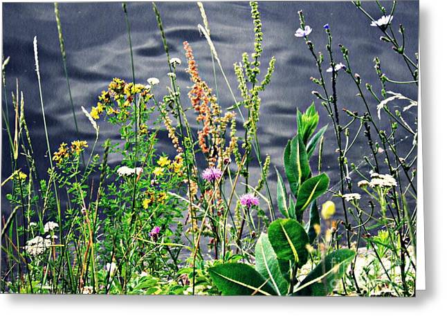 Blue Green Water Greeting Cards - Wildflowers on the Rhine  Greeting Card by Sarah Loft