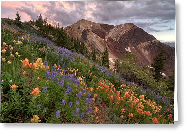 Wildflower Greeting Cards - Wildflowers with Twin Peaks at Sunset Greeting Card by Brett Pelletier