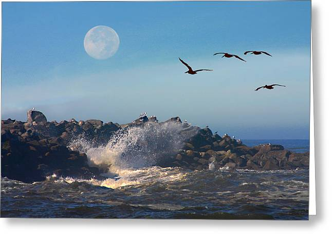 Flying Seagull Greeting Cards - Wildlife Haven Greeting Card by Raymond Klein