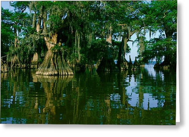 Wildlife Refuge At Lake Fausse Pointe Greeting Card by Panoramic Images