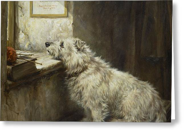 Will He Come Back Greeting Card by Robert Morley
