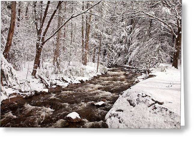 New England Wilderness Greeting Cards - Willard Brook 2 Greeting Card by Susan Cole Kelly