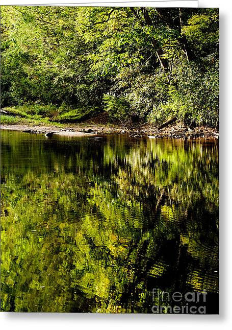 Williams River Summer  Greeting Card by Thomas R Fletcher