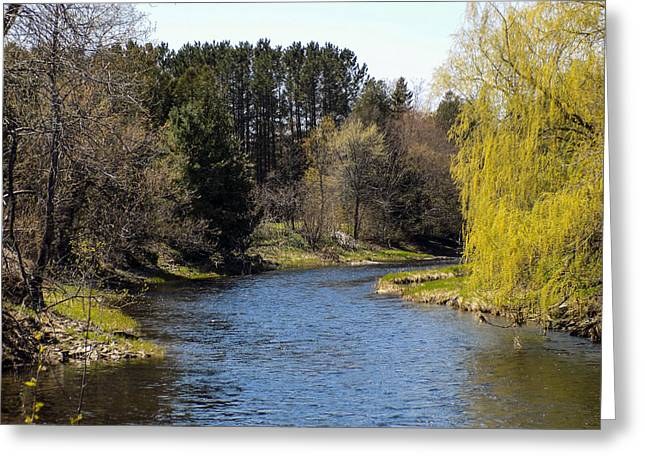 Maine Spring Greeting Cards - Willow and Water Greeting Card by William Tasker