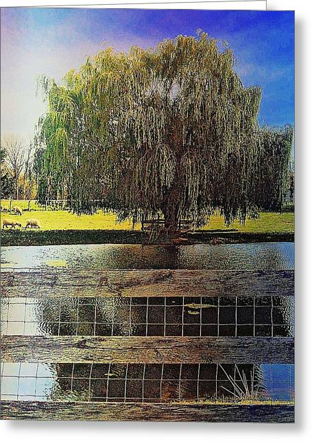 Weeping Greeting Cards - Willow Greeting Card by Kacie Donnelly