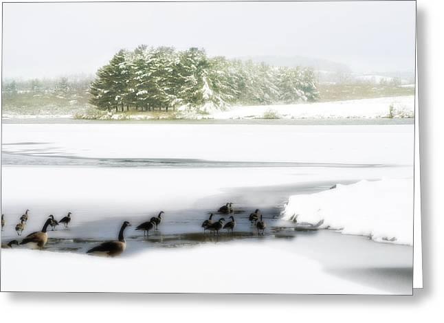 Willow Lake Greeting Cards - Willow Lake Geese Greeting Card by Kathy Jennings