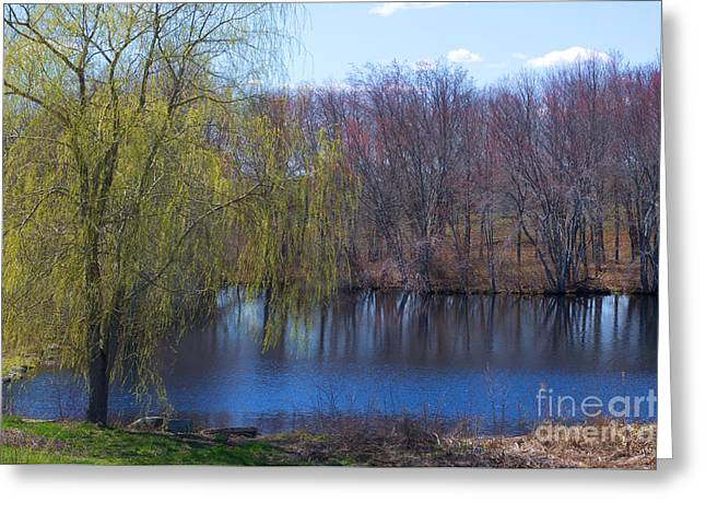 Willow Lake Greeting Cards - Willow Pond Greeting Card by Ray Konopaske