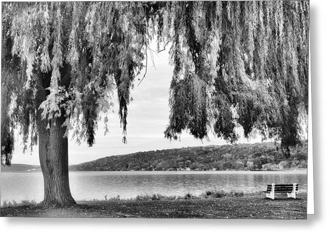 Willows Of Lake Cayuga Greeting Card by Jessica Jenney
