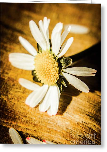 Wilt Greeting Card by Jorgo Photography - Wall Art Gallery