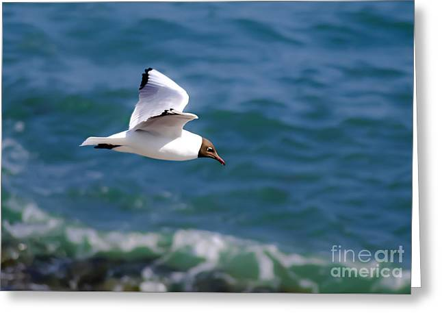 Flying Seagull Greeting Cards - Wind Beneath By Wings Greeting Card by F Helm