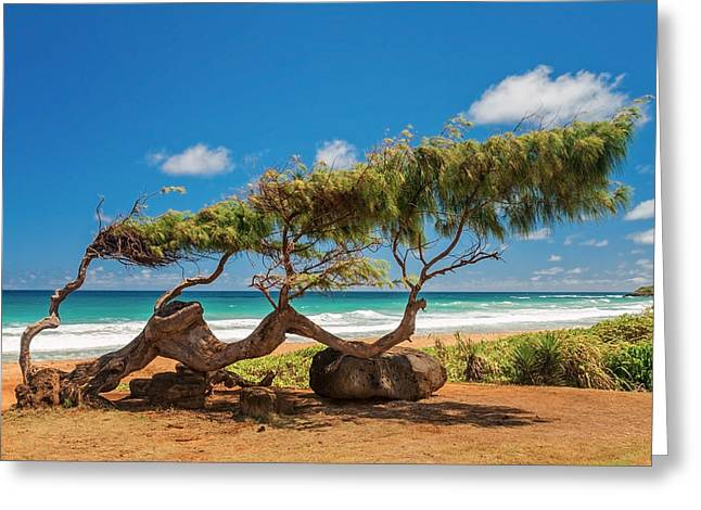 Seascape Photography Greeting Cards - Wind Blown Tree Greeting Card by Brian Harig