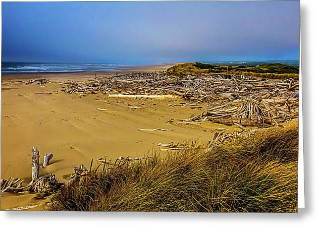 Wind Swept Beach Greeting Card by Garry Gay