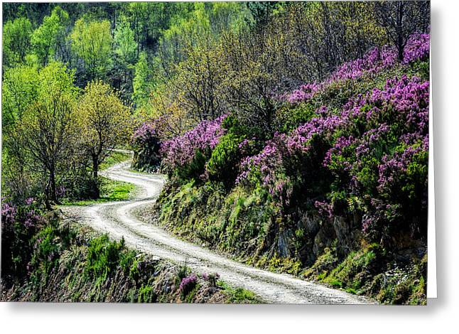 Gravel Road Greeting Cards - Winding Road in Portugal Greeting Card by Marion McCristall