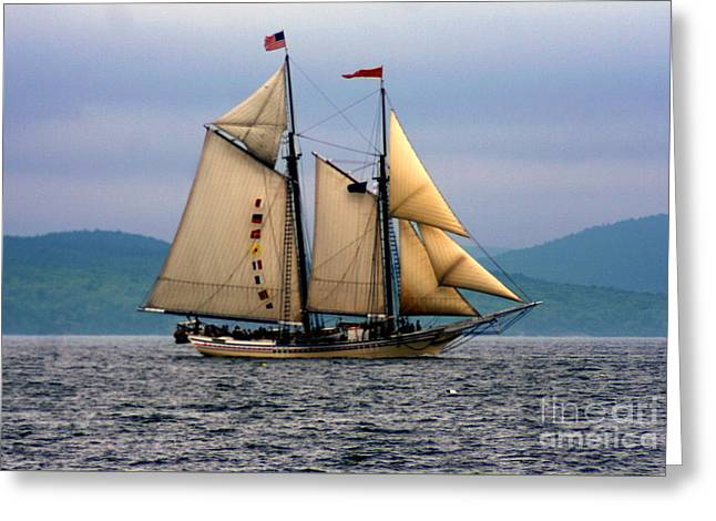 Historic Schooner Greeting Cards - Windjammer Lewis R French Greeting Card by Jim Beckwith