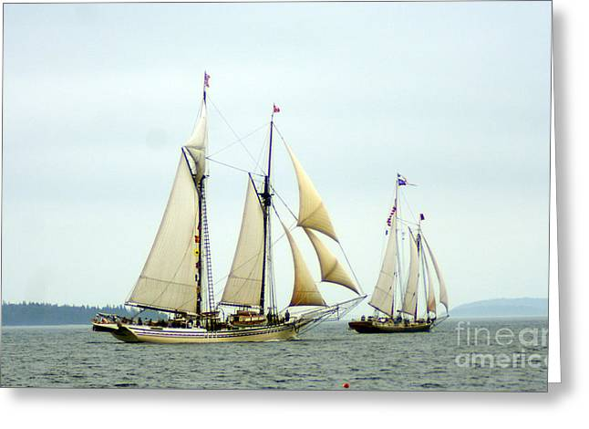 Historic Schooner Greeting Cards - Windjammer Race Greeting Card by Jim Beckwith