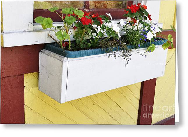 Flower Boxes Greeting Cards - Window Flower Box Greeting Card by Thomas R Fletcher