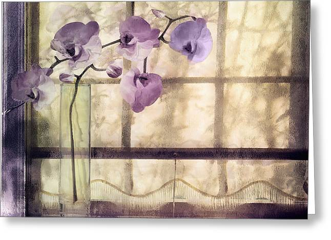 Purple Orchids Greeting Cards - Window Orchids Greeting Card by Mindy Sommers
