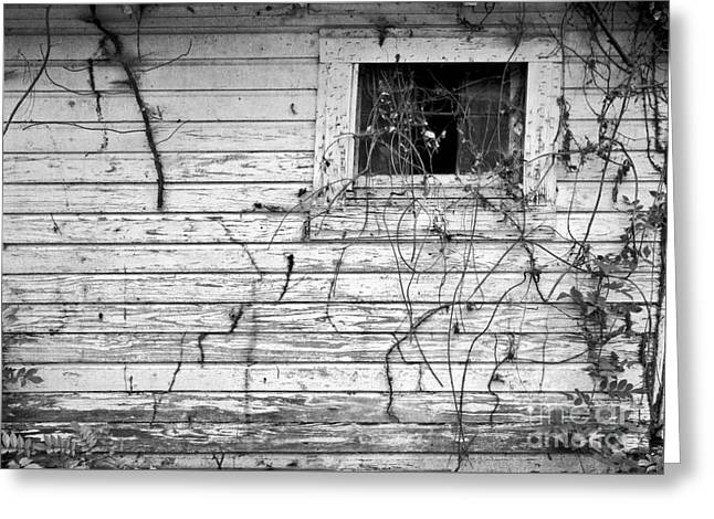 Large Format Greeting Cards - Window To The Past Greeting Card by Patrick M Lynch