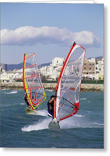 Windsurfing Greeting Card by Alexis Rosenfeld