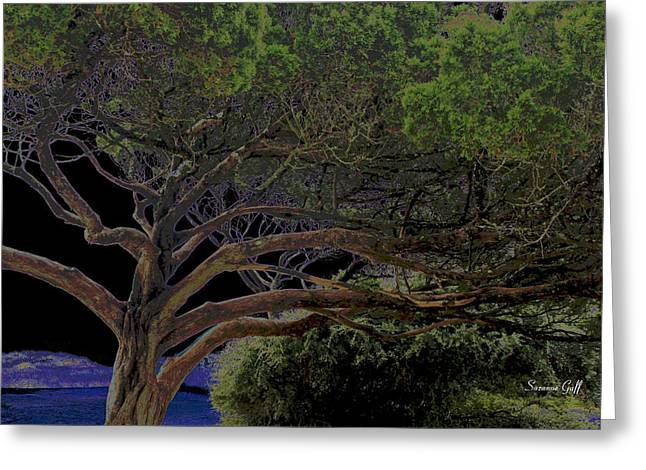 Tree Art Giclee Greeting Cards - Windswept Dreams Greeting Card by Suzanne Gaff
