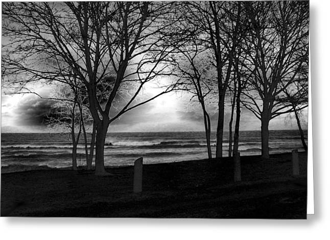 Greeting Cards - Windswept Niagara on the Lake Greeting Card by Stephen  Killeen