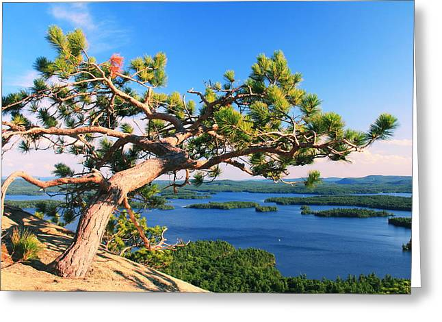 Recently Sold -  - Ledge Greeting Cards - Windswept Pine on Rattlesnake Mountain Greeting Card by Roupen  Baker