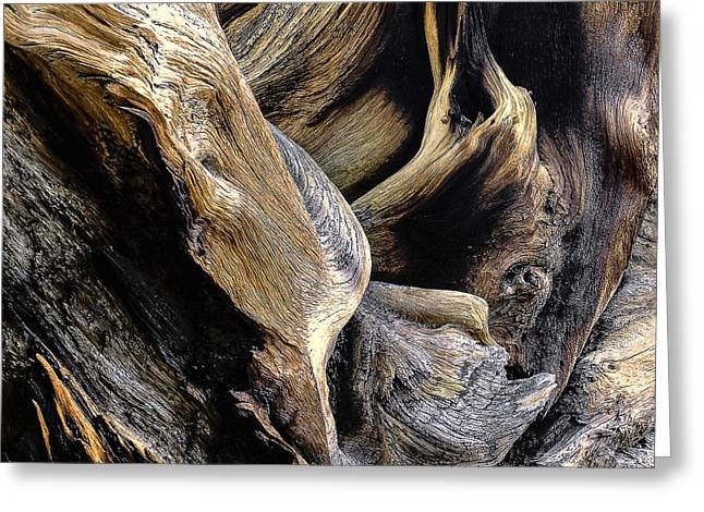 Woodgrain Greeting Cards - Windswept Roots Greeting Card by The Forests Edge Photography - Diane Sandoval