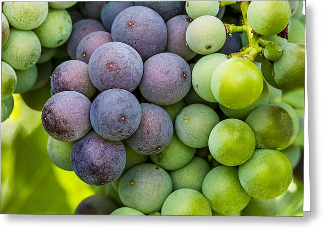 Mountain Valley Greeting Cards - Wine Grapes Close up Greeting Card by Teri Virbickis