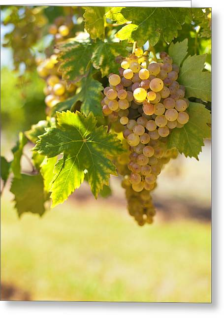 Grape Leaf Greeting Cards - Wine   Greeting Card by Ulrich Schade