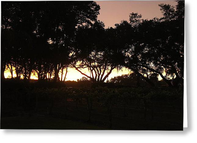 Grape Vineyard Greeting Cards - Wine with Sunset Greeting Card by Laurie Perry