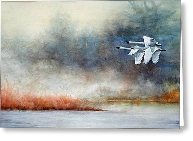 Swans... Greeting Cards - Winging It Greeting Card by Deb Watson