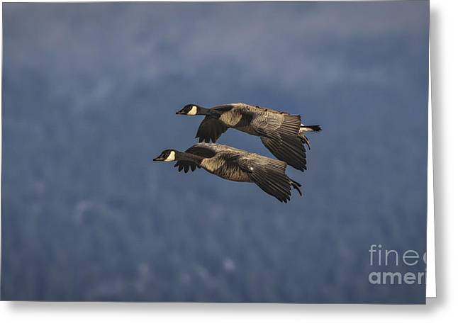 Hunting Bird Greeting Cards - Wingman  Greeting Card by Mitch Shindelbower