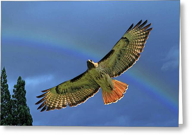 Wings 2 Greeting Card by Donna Kennedy