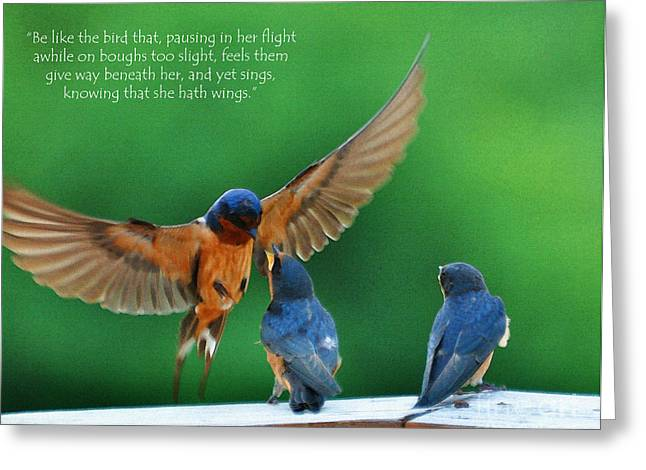 Baby Swallows Greeting Cards - Wings Greeting Card by Diane E Berry