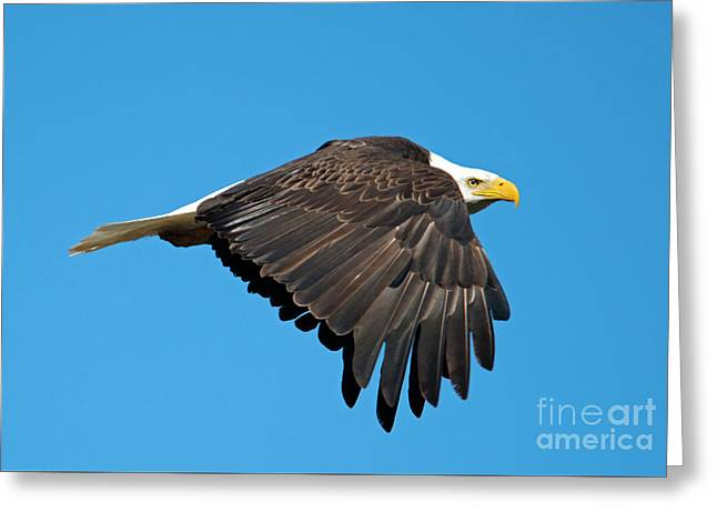 Wings Down Greeting Card by Mike Dawson